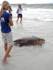 turtle photo 1