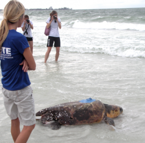 May 1 is the official start of the sea turtle nesting season