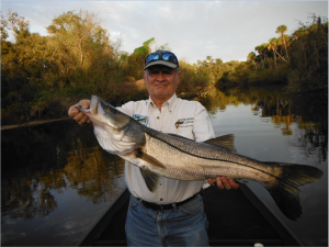 Doc Dojutrek shows off a big Myakka river snook