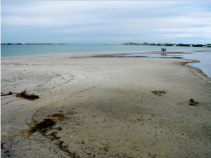 Grass and mud flats abound during the winter with significant low tides, as pictured northeast of Siesta Drive Bridge. Photo by Paul Roat