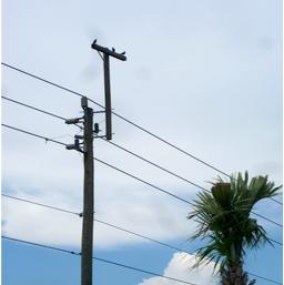 telephone pole pic
