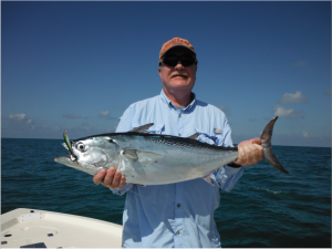 False albacore will provide great sport off of the Siesta Key beaches in November