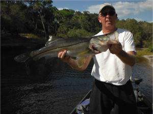 Capt Jim with a nice Myakka River snook
