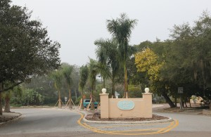 New royal palms stand in the median right of way of the Siesta Isles entry on Shadow Lawn Way. Sarasota News Leader photo