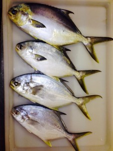 Fresh caught Pompano available at Big Water Fish Market