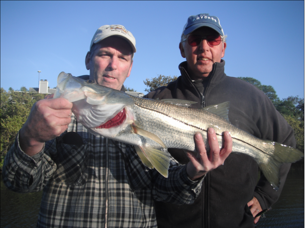 snook will migrate up into Siesta  Key canals in December