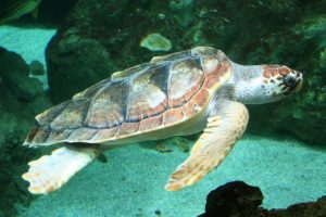 Final sea turtle nesting numbers